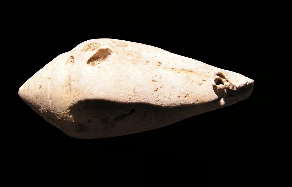 Conidae - † Conus subalsionus (A d'Orbigny, 1852) - Aquitaine C_subalsio10