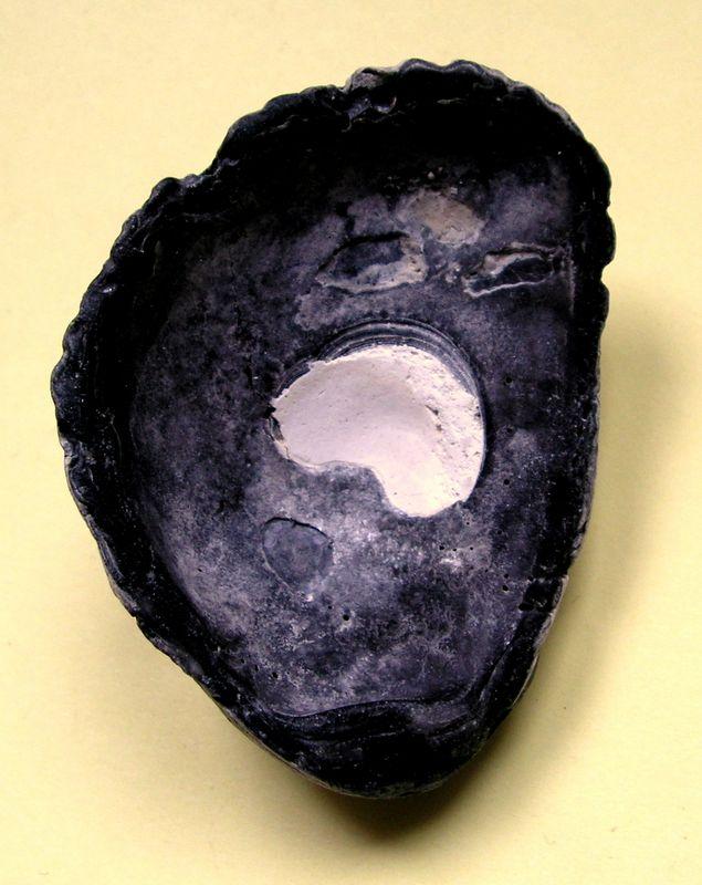 Huîtres et microfossiles charentais  Saccostrea10